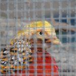 Stavebnice Aluhobby pro každého chovatele ptactva